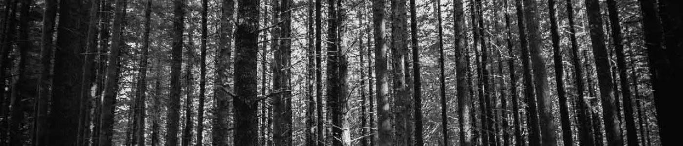 wild-trees